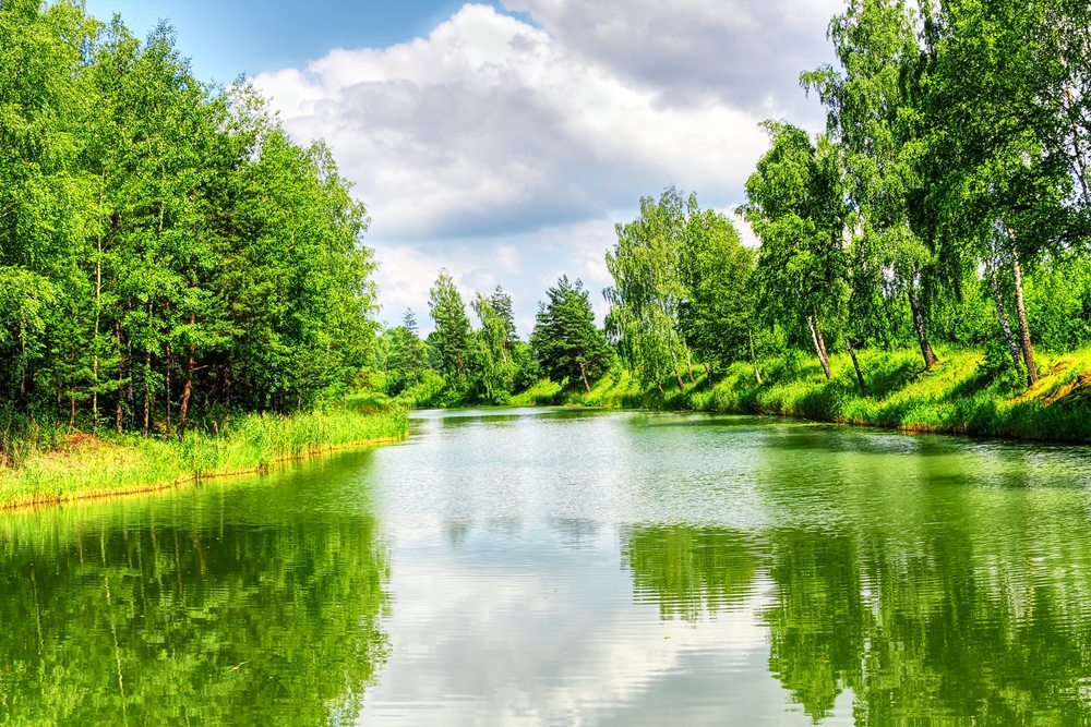 Natur-WDG-Photo-Shutterstock.com