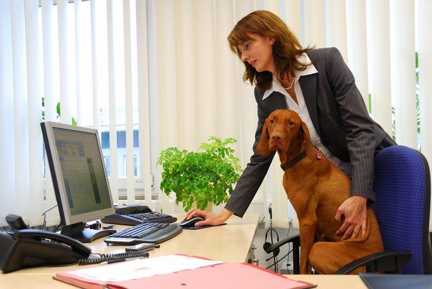 Damit Tier und Mensch im Büro perfekt harmonieren, müssen einige Regeln beachtet werden (Bild: Wolfgang Zintl / Shutterstock.com)