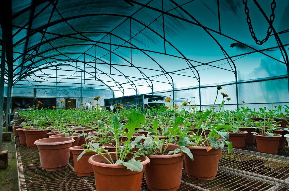 Eine weitere Idee ist es, die Pflanzen abgeschirmt in einer reinen CO2-Atmosphäre aufzuziehen. (Bild: PathDoc / Shutterstock.com)