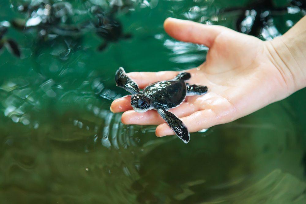 Patente auf Tiere und Pflanzen. (Bild: My Good Images / Shutterstock.com)