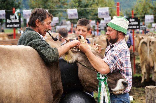 79,5 % des in der Schweiz verzehrten Fleischs stammen aus dem Inland. (Bild: Stefano Ember – shutterstock.com)