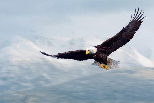 Seien Sie ein Adler, kein Huhn! (Bild: © FloridaStock / shutterstock.com)